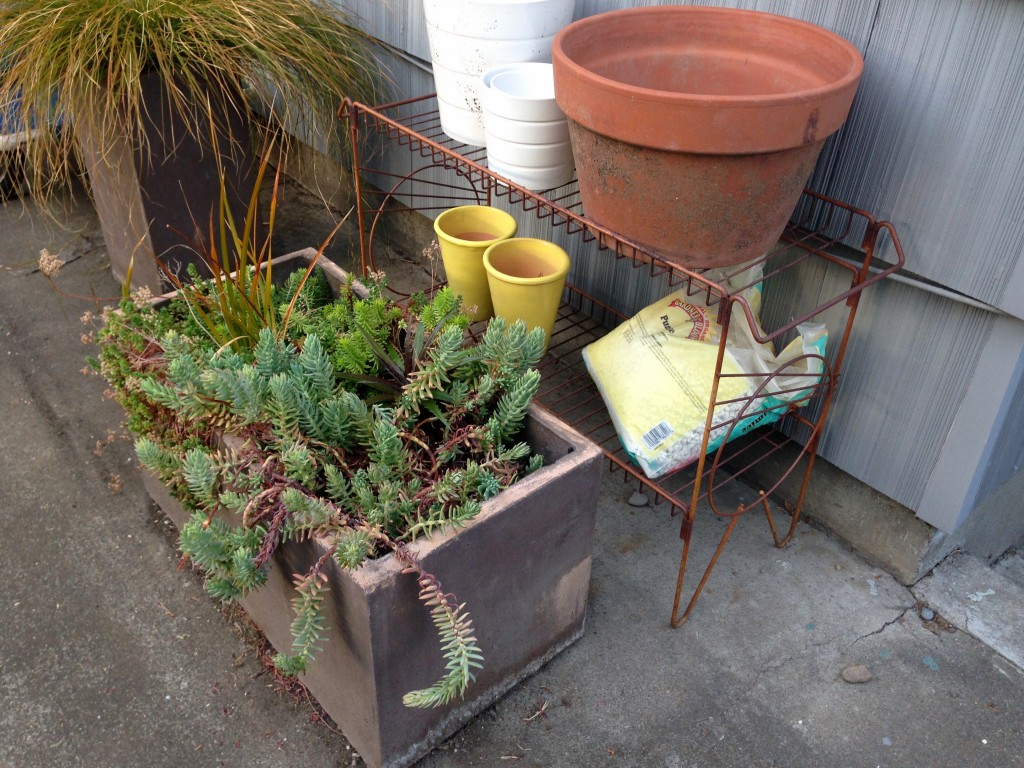 Rusty plant stand. I should put to better use.