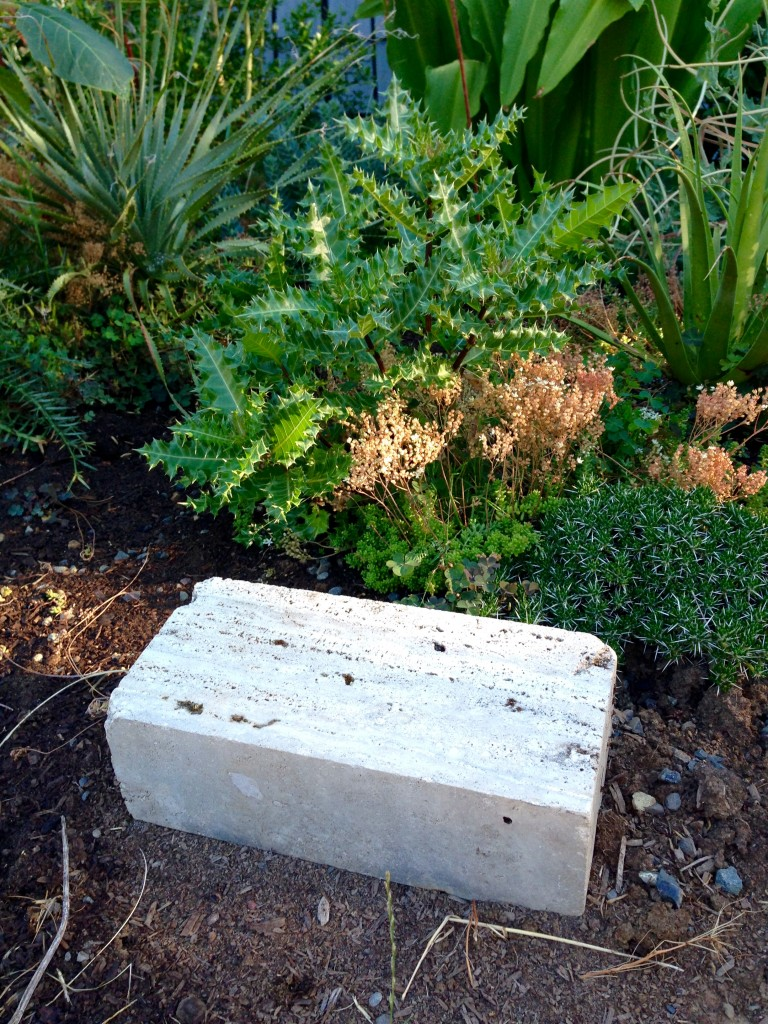 Marble blocks waiting for inspiration with Acanthus, Agave bracteosa, and Dasylirion, etc.
