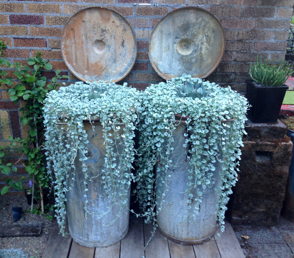 Vintage rubbish bins, French, I believe, repurposed as artful planters.
