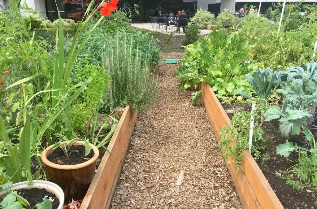 Office Garden Space