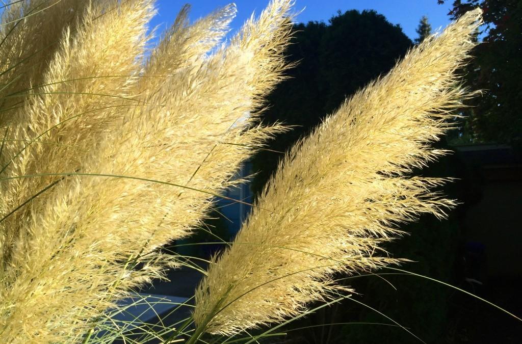 Grasses Having a Moment