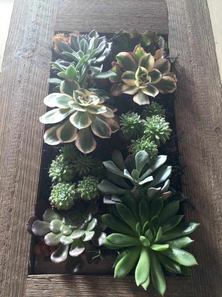 vert box succulent mix