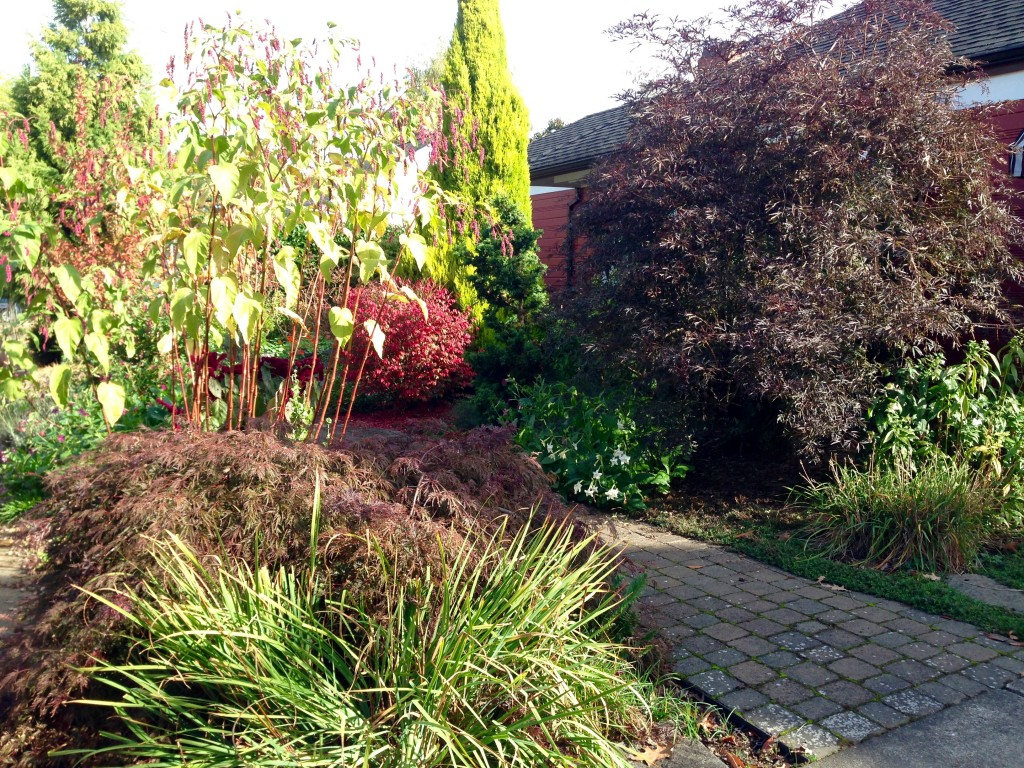 A front garden, west-facing in the Concordia neighborhood.
