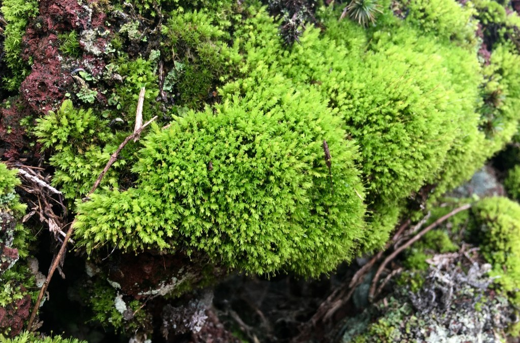 obsessing over moss & lichen