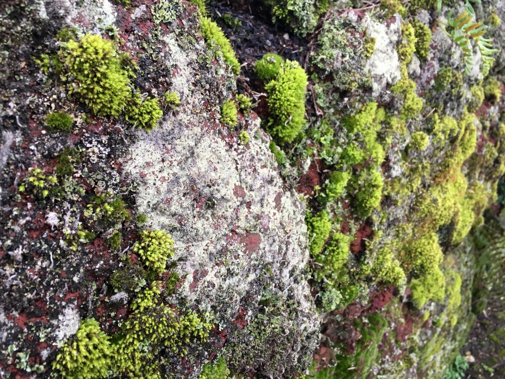 Sneak peek out front. Moss & lichen covered lava rock wall. Steve, I ask you, what's not to love?