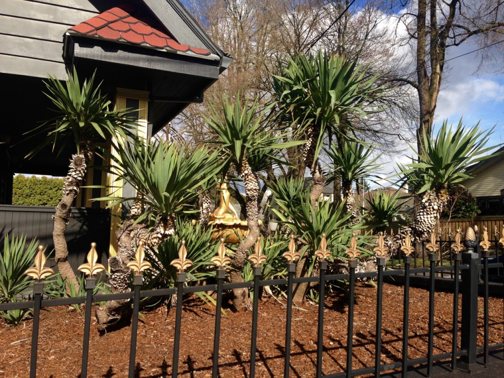 yucca and gold fence