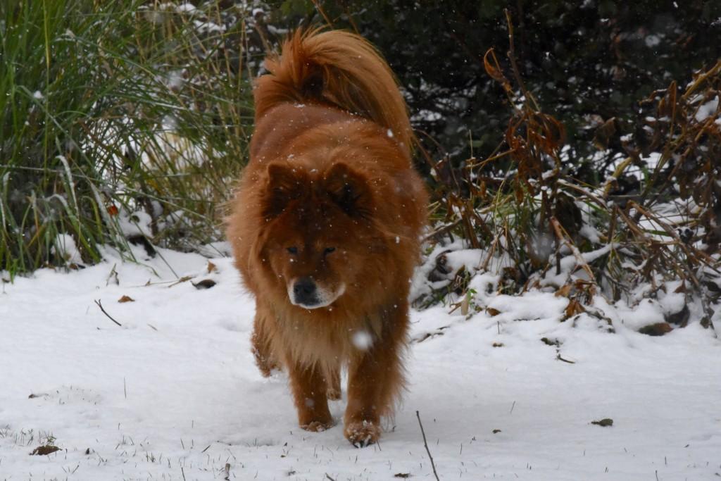 Pumpkin thinks snow is terrific.