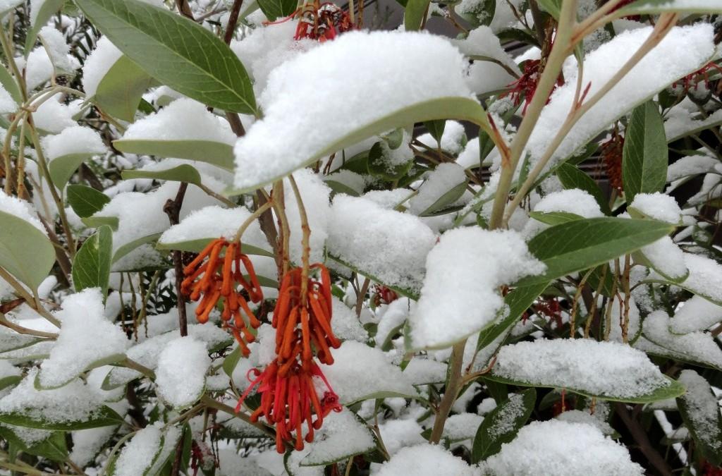 No shortage of winter interest (Part 1)