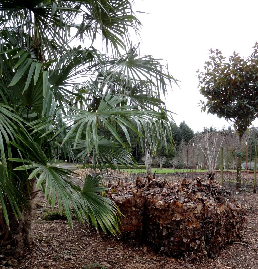 The Oregon Garden has spikes! - Plant Lust