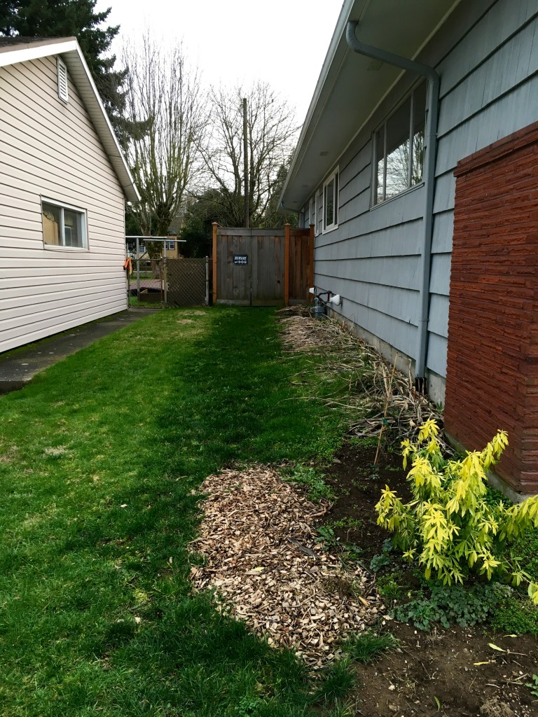Side yard to the east--that's a bed of Iris alongside the house. Probably on it's way out.
