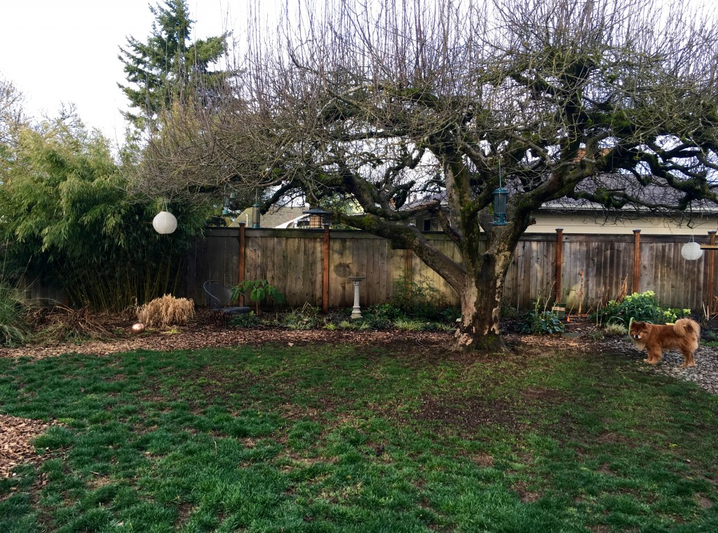 There's the apple tree, needing a good hair again this year. Maintenance!