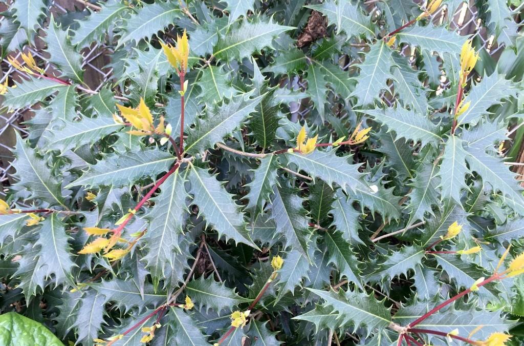 springtime plant lust