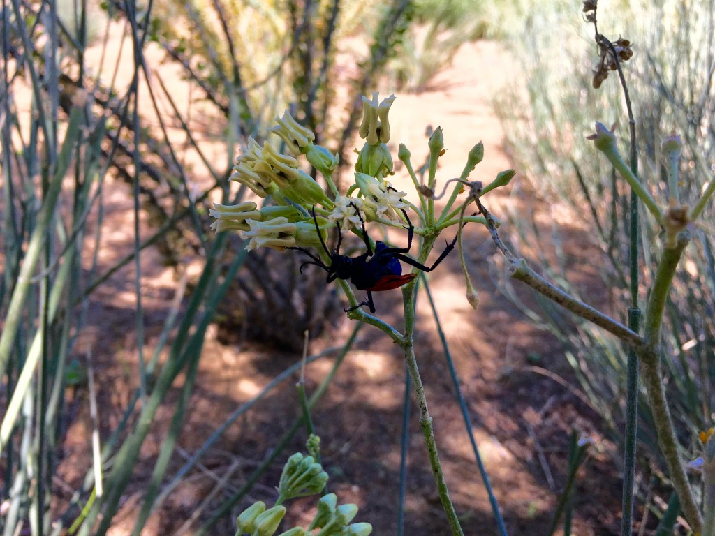 Unidentified bug on unidentified plant. You're welcome.