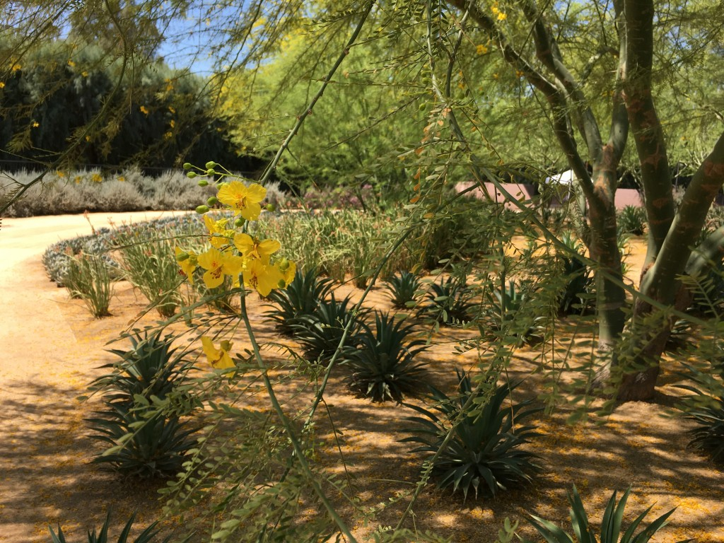 The Palo Verde bloom is an intense clear yellow.