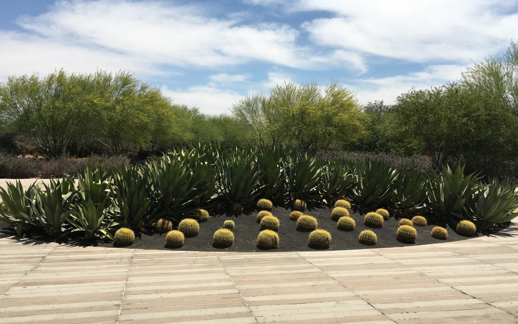 Sunnylands Gardens: say what?