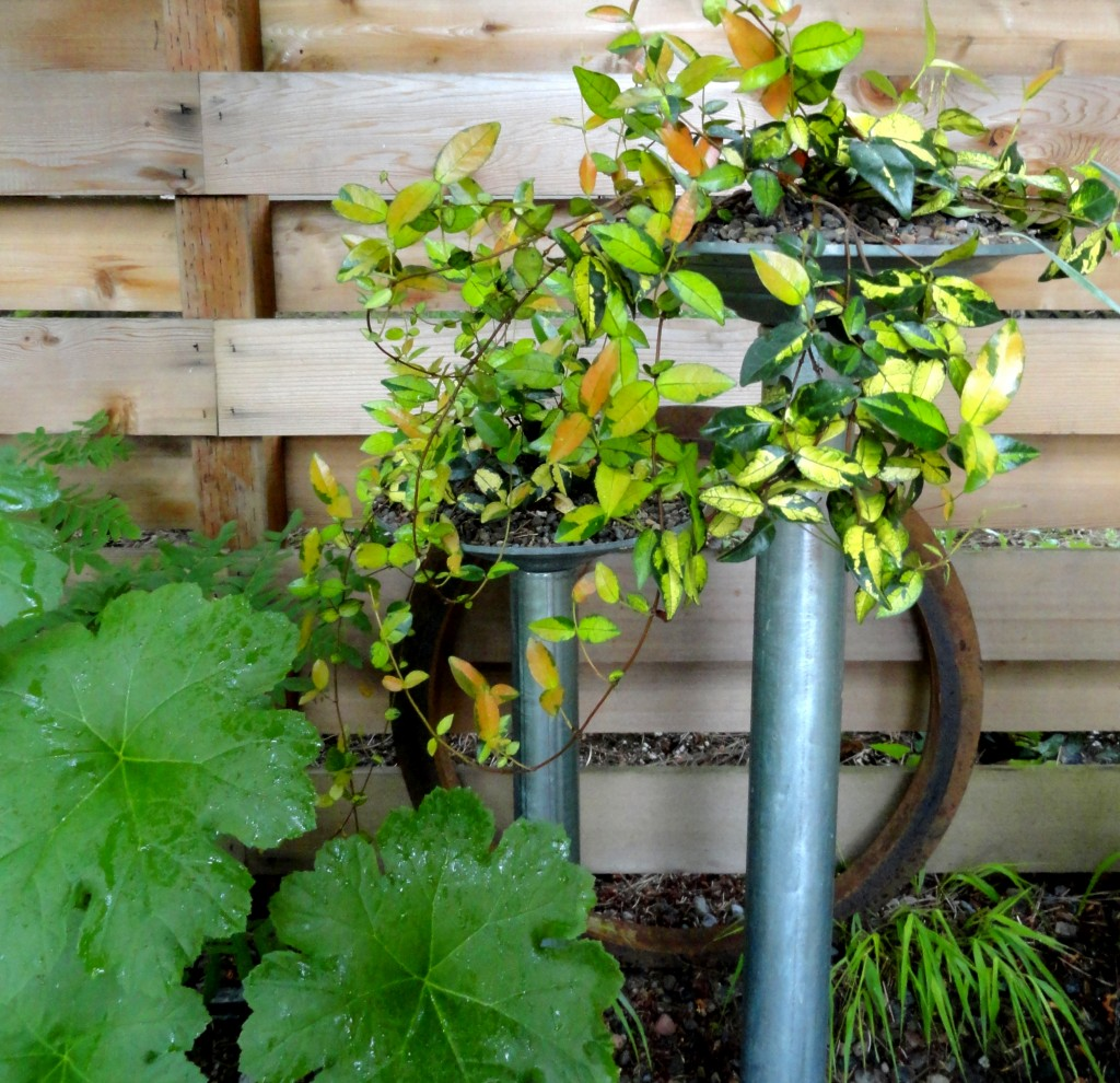 planters with ring