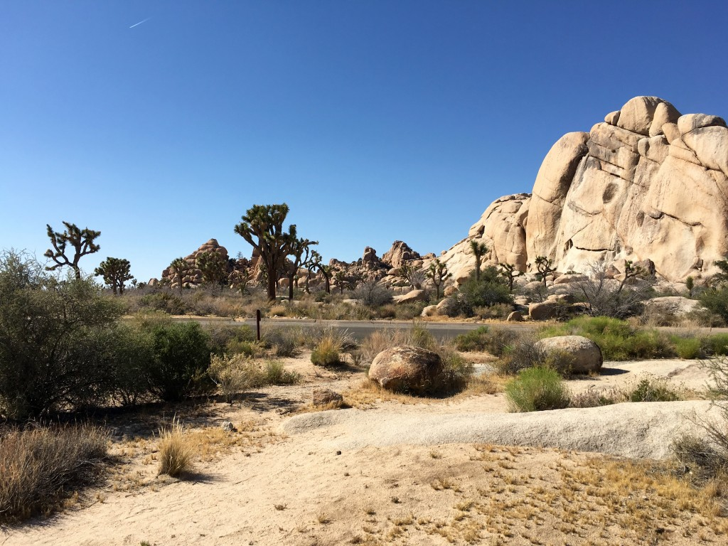 Joshua Tree National Park, just one of a million fabulous vistas.