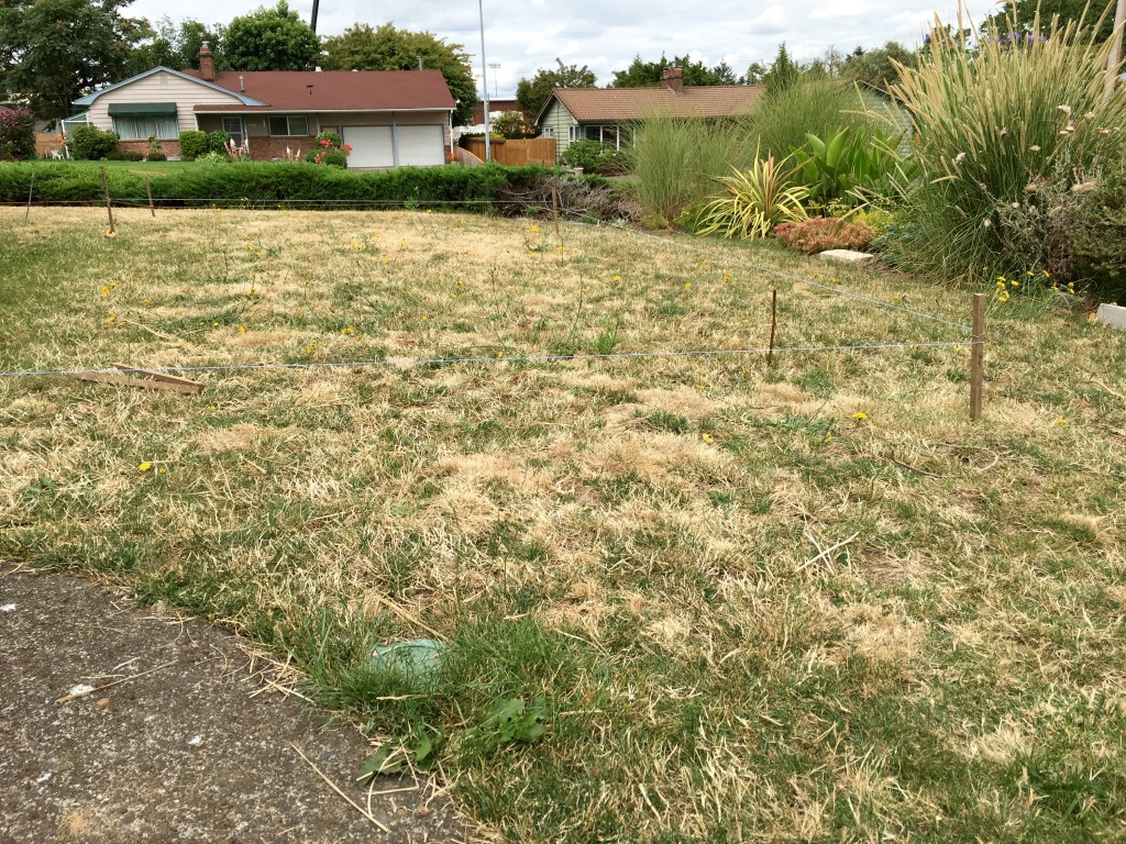 Sad front lawn in the planning stage.