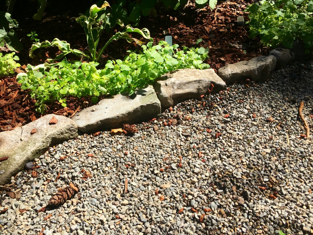 Yet another material, stone edging--which blends perfectly.