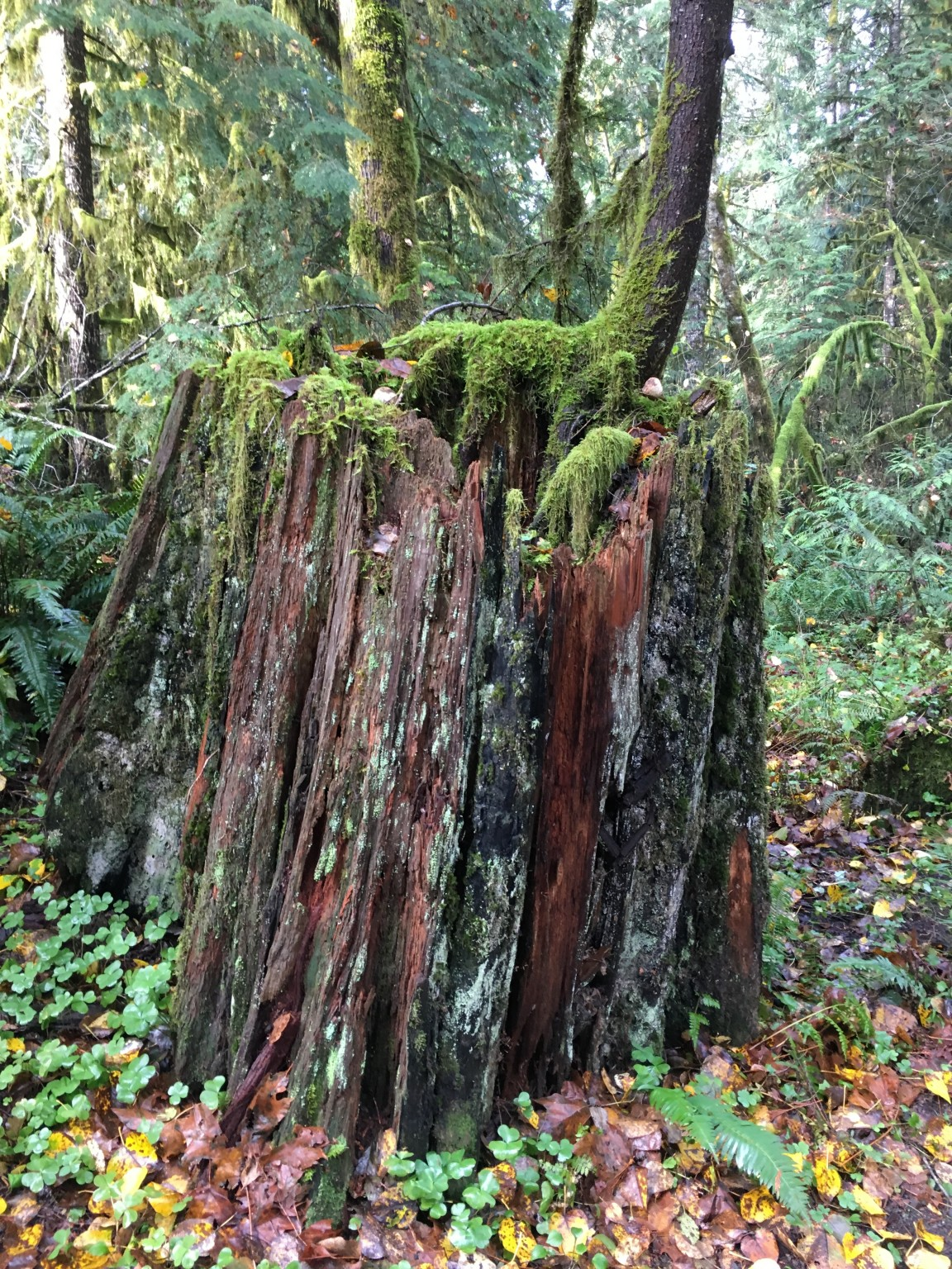 Giant tree stump teaming with life.