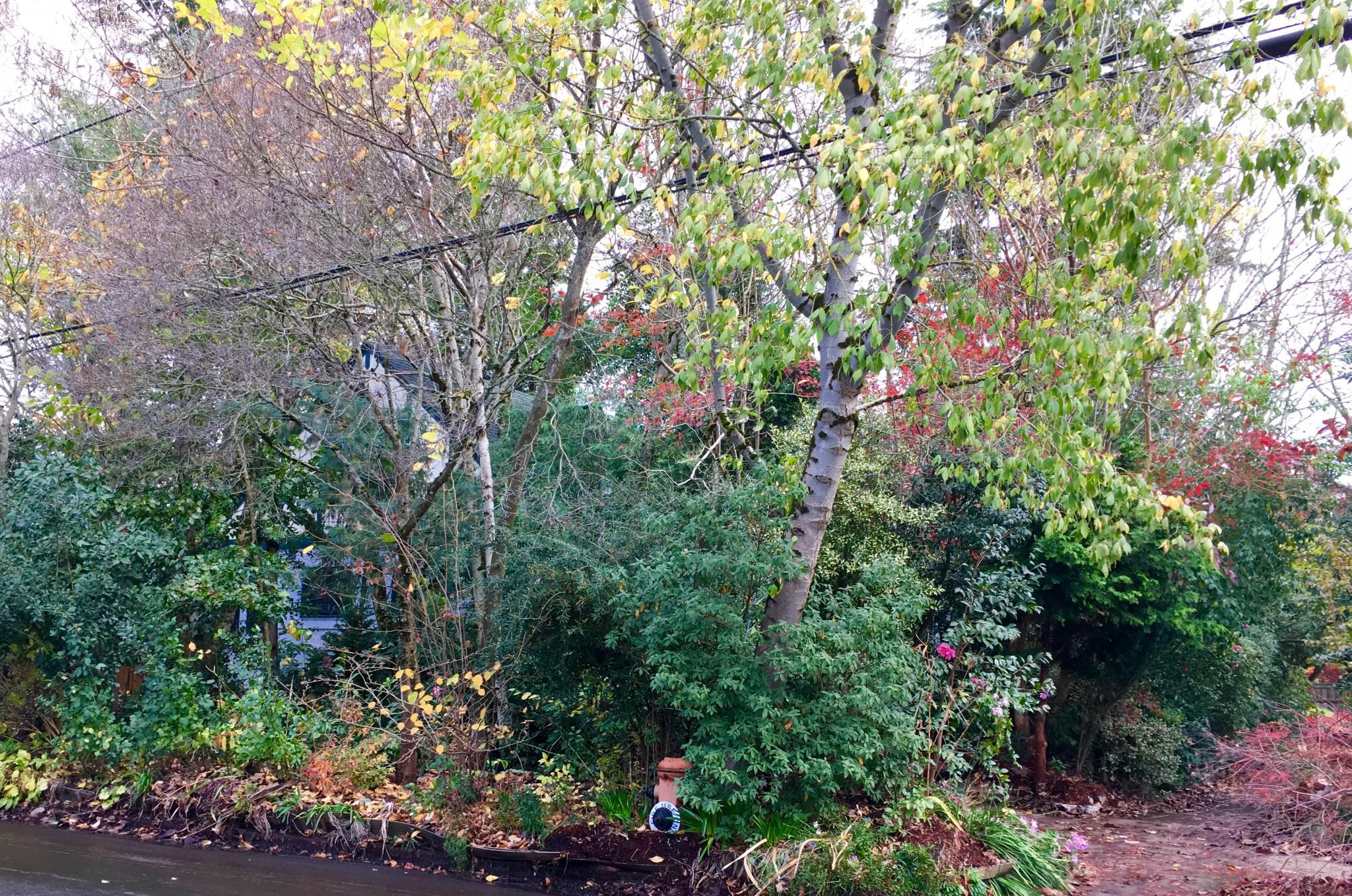 Skidmore Woods in Portland's Alameda Neighborhood.