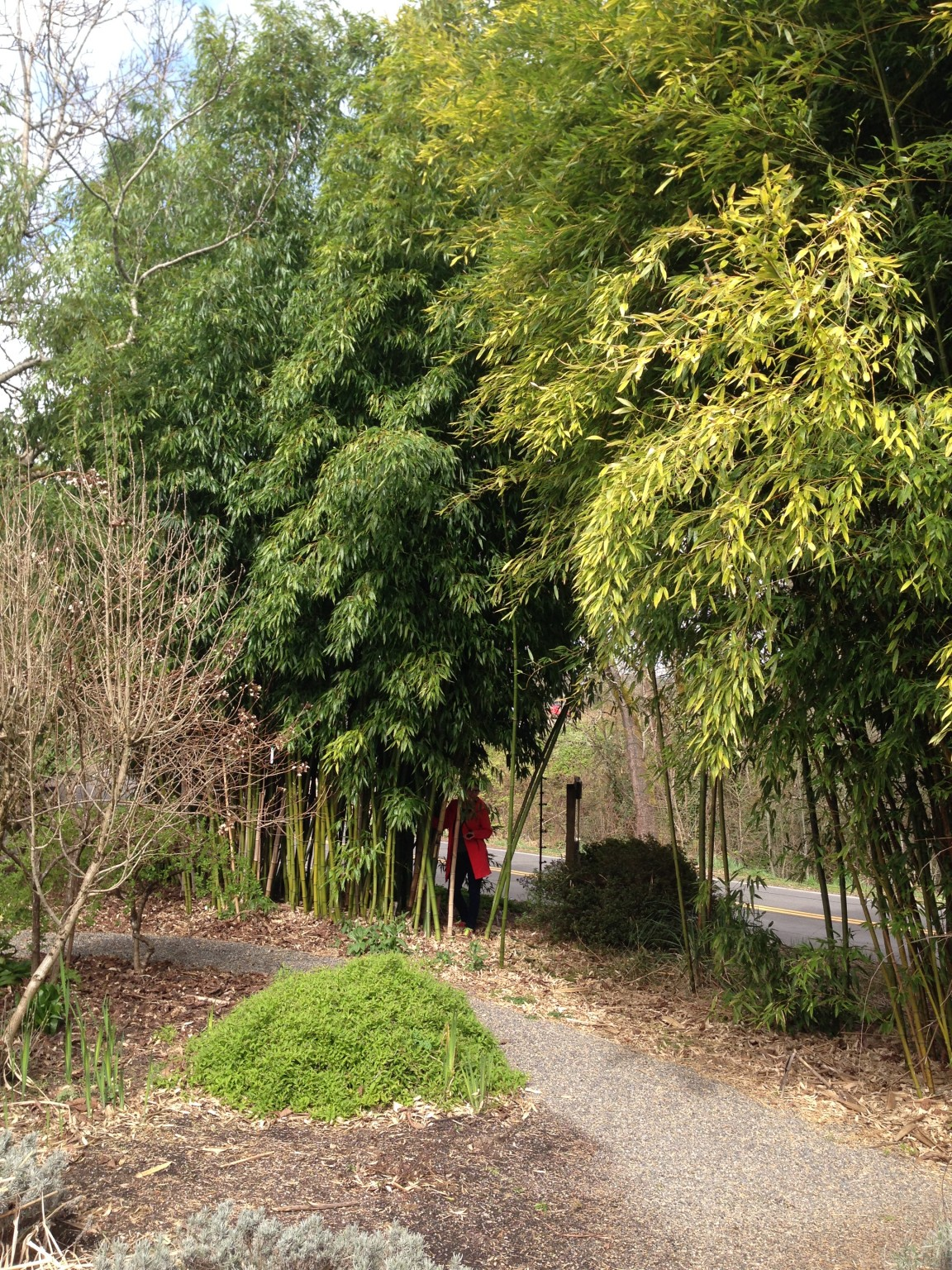 A previous visit to Joy Creek Nursery.