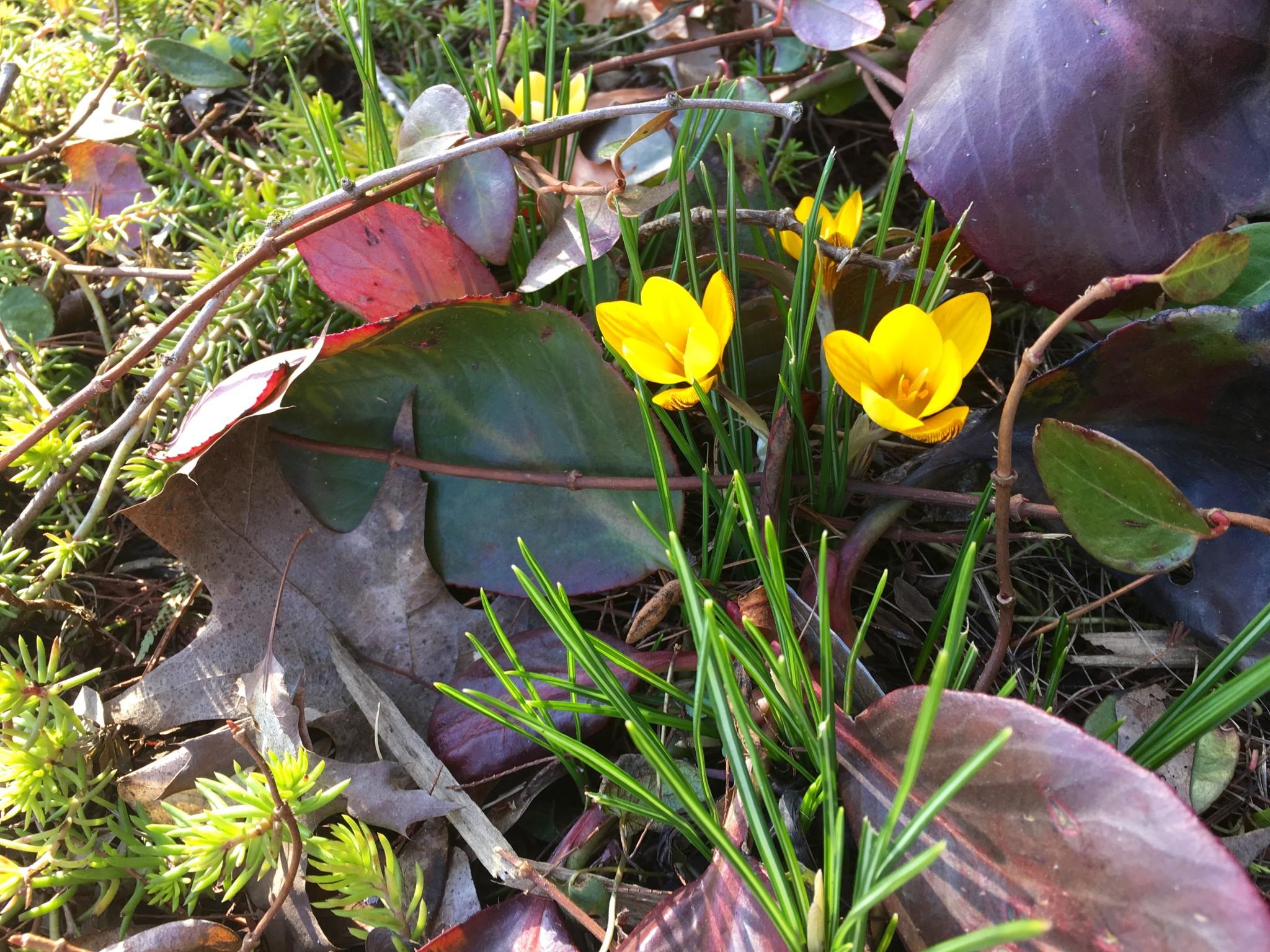 Little yellow flower encountered during neighborhood stroll. Yay.