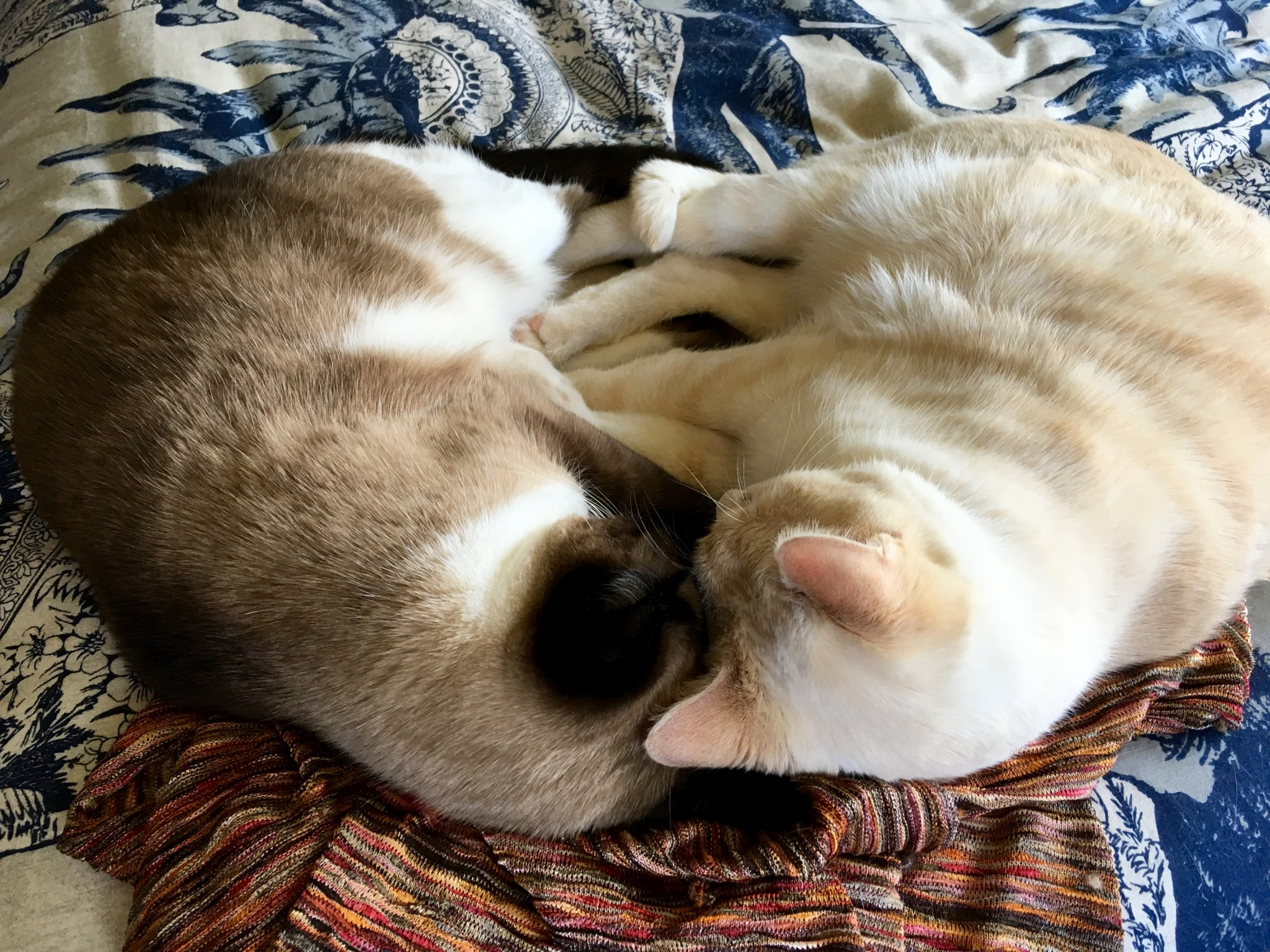 Posy & Mister snuggled to form a heart.
