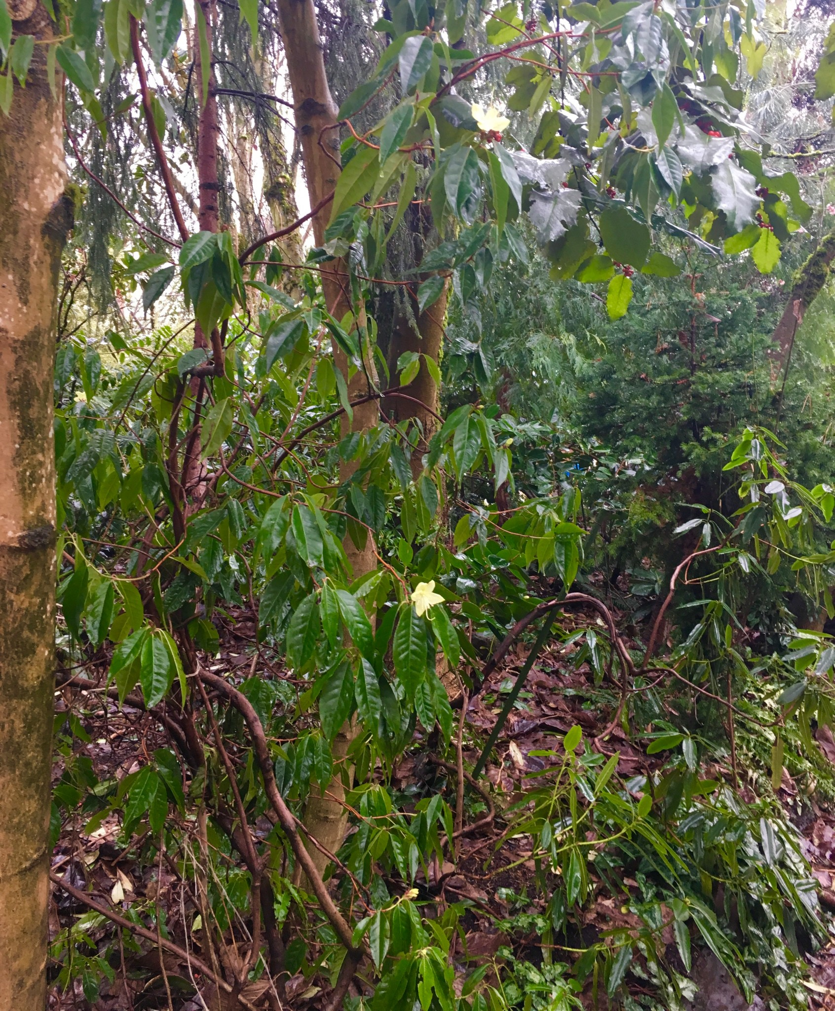 A wider shot. A leggy shrub or a vine?